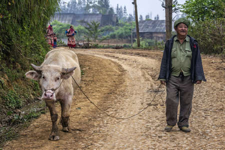 farmer walking his albino buffalo along mountain road. Rare animal comes from the market while Hmong women appear around the bend.