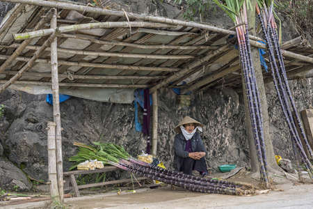 Vietnam Quang Binh Province, March 2012, roadside booth with female vendor selling long sugar cane stalks.