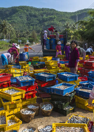 qui: Vietnam Qui Nhon beach area - March 2012: Heaps of fish on yellow, blue and red plastic containers are sorted and loaded on trucks.