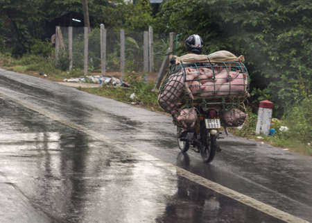 Beige-pink young pigs are stacked on top of each other in a small cage mounted on the back of a motorcycle, which speeds along the road in the rain.