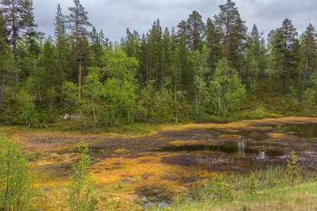 adds: Marchland in northern Lapland during summer  Marshland adds some golden colors in an otherwise green environment  Stock Photo