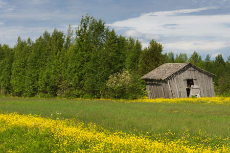 A ribbon of yellow flowers cuts through the green grass in front of the barn set against green trees under blue skies. Reklamní fotografie