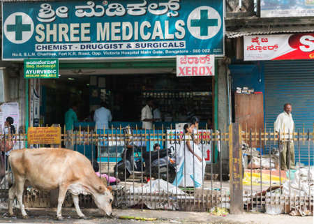 BANGALORE, INDIA - CIRCA OCTOBER 2013  Pharmacy in the old town   Cows and garbage are common staple in the streets of India, even in a metropolis like Bengaluru