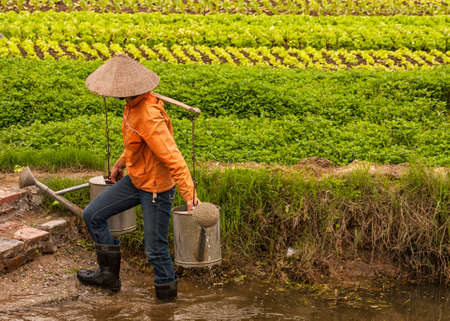 RED RIVER DELTA, VIETNAM - CIRCA MARCH 2012: Female farmer holding two full watercans on bamboo shoulder holder. Stepping out of the pool where she filled the cans with green veggie background. Editorial