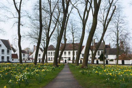 Beguinage of Bruges and daffodils in early spring 2014