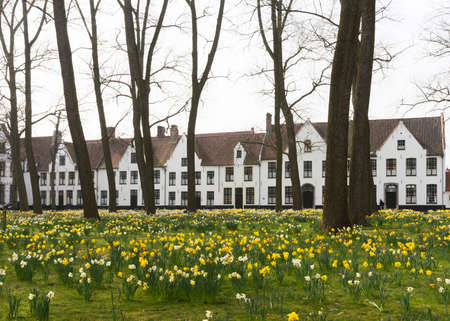 chastity: Beguinage of Bruges and daffodils in early spring 2014