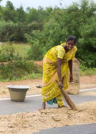 sweeps: KUMBAKONAM, INDIA - OCTOBER 10, 2013: Young woman sweeps with a traditional broom the threshed millet kernels together, separating them from the empty husks.