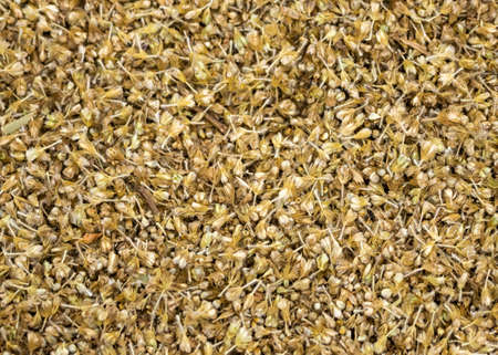 chaff: Close-up of unthreshed millet still in chaff, husks. Stock Photo