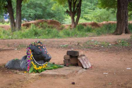nandi: Chettinad, India - October 17, 2013: Ancient Shiva shrine in forest near Kothamangalam shows black Nandi facing the Shivalingam. He is decorated with flowers and lies half submerged in the brown dirt.