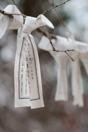 pleas: Kyoto, Japan - September 15, 2016:One white paper prayer strip in focus and knotted around a tree branch at Heian Shrine. People print or write their pleas and wishes on paper and leave it at the shrine.
