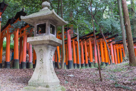 Kyoto, Japan - September 17, 2016: Thousands of vermilion Torii create path at Fushimi Inari Taisha Shinto Shrine. Walkway leads into the forest up and down the hill. Stone lantern in front.