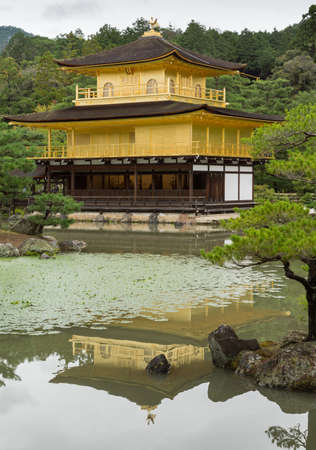 Kyoto, Japan - September 19, 2016: The golden temple of Kinkaku-ji stands behind pond and in front of jungle trees. Portrait composition. Temple is partly reflected in the pool. Editorial