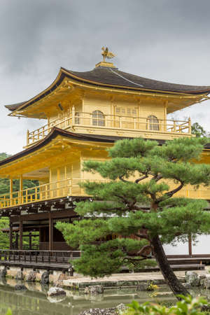 Kyoto, Japan - September 19, 2016: The golden temple of Kinkaku-ji stands behind pond. Closeup portrait composition. A green pine tree add contrasting color. Editorial
