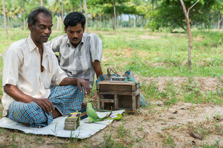 Dindigul, India - October 23, 2013: Two ambulant future telling merchants use a green parrot to flip cards supposedly giving clues about the future of the client. Rural setting with green foliage. Editorial