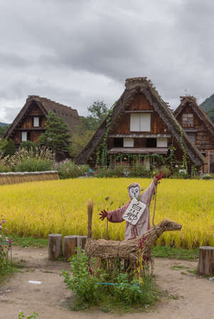 joined hands: Shirakawago, Japan - September 23, 2016: A well designed scarecrow stands in front of yellow rice paddy adjacent to houses with the particular joined hands roofs. Editorial