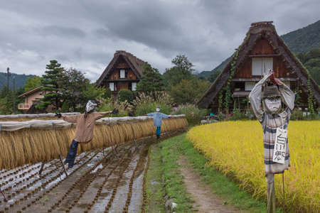 joined: Shirakawago, Japan - September 23, 2016: Three well designed scarecrows stand in yellow and brown rice paddies adjacent to houses with the particular joined hands roofs. Editorial