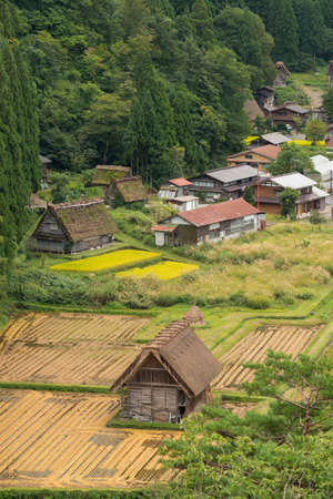 Shirakawago, Japan - September 23, 2016: Aerial view on a barn in Shirakawago. Surrounded by rice paddies in different stages of riping and harvesting.