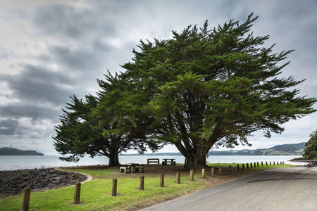 Auckland, New Zealand - March 2, 2017: Two tall green windswept trees at the shoreline of Whatipu Point on Huia Bay under heavy cloudy sky. Entrance to Tasman Sea in back. Road and lawn in front. Editorial