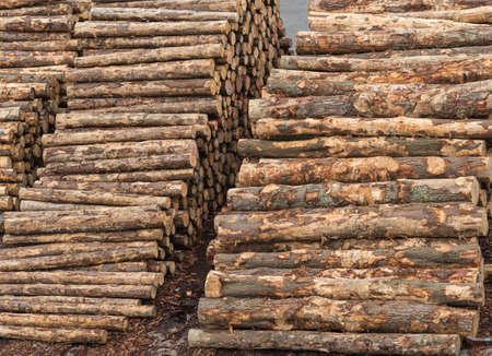 Napier, New Zealand - March 9, 2017: Closeup of two piles of tree trunks at large timber harbor. Heaps of brown tree trunks sawed at fixed length. Shades of brown. Stock Photo