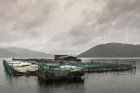Picton, New Zealand - March 12, 2017: Wide shot of entire King Salmon farm in Ruakaka Bay under cloudy sky full of rain. Industrial installation with pens and nets above sea water. Mountains in back.
