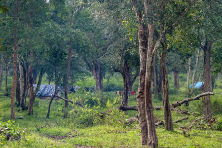Coorg, India - October 29, 2013: Dubare Elephant Camp. Tribal dwellings hidden in jungle are bamboo-clay huts with blue tarps as roof. Green setting, Colored laundrry.
