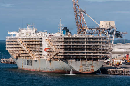 Fremantle, Australia - November 25. 2009: Massive tall Siba Ship called Ocean Shearer loads up living sheep to transport to Muslim countries docked at the port under blue sky and floating on blue ocean water. Cranes and harbor equipment in back.