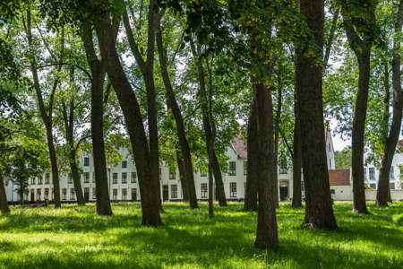 Bruges, Flanders, Belgium -  June 17, 2019: Enclosed central park of Beguinage comes with green lawn and lots of tall dark trunked trees and green foliage hiding the sky, White houses in back.