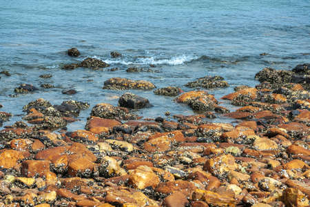 Newcastle, Australia - December 10, 2009: Closeup of rust-colored rocks forming stretch of beach. Black and white spots by shellfish. Blue South Pacific Ocean water.