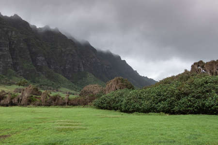 Kaaawa, Oahu, Hawaii, USA. - January 11, 2020: Tree belt separates green meadow from dark brown to black high rocky cliffs on side of Kualoa valley under cloudy rainy sky.