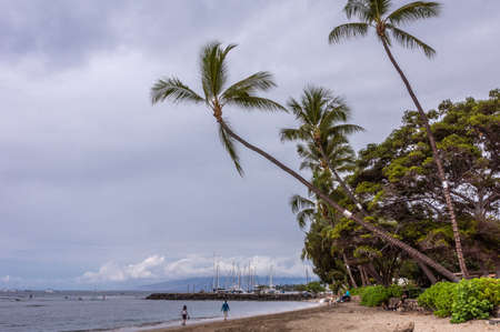 Lahaina, Maui, Hawaii, USA. - January 12 2012: Sand beach covered with palm and other green trees with sail boat harbor in back under heavy cloudscape. Ocean is flat and dark.