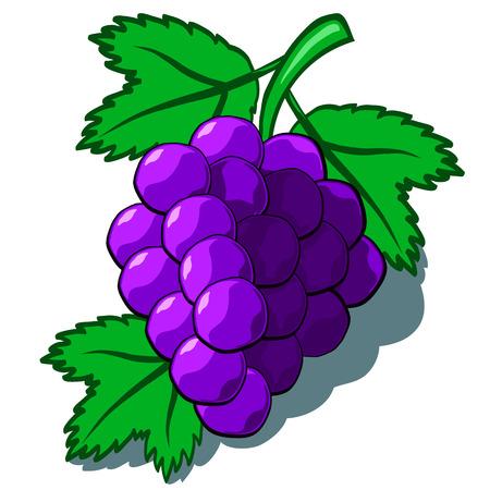 Mignon tas de pourpre raisins vecteur bande dessinée