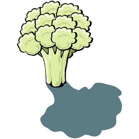 Cute cartoon Cauliflower Vector