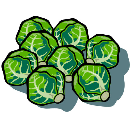 brussels sprouts: Cute cartoon Brussels Sprouts