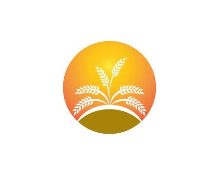 Wheat rice logo design template Illustration