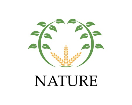 Wheat rice nature logo design vector illustration