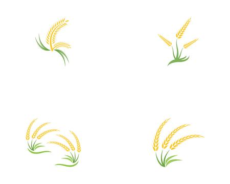 Wheat rice icon logo vector template