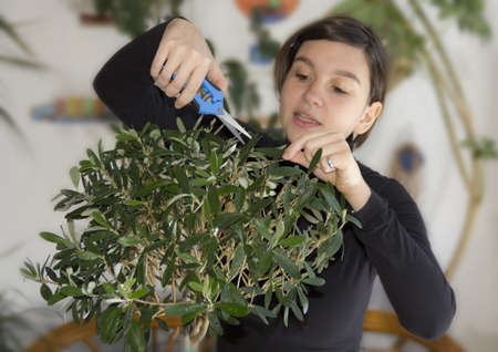 Girl trimming olive tree bonsai Stock Photo