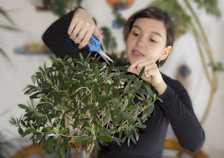Girl trimming olive tree bonsai Standard-Bild