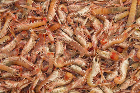 Fresh Kvarner Scampi-proven the best on the world photo