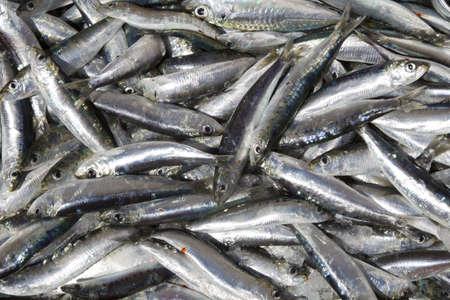 fishmonger: Fresh sardines on a fishmonger s stall in a sunny fish market  Stock Photo