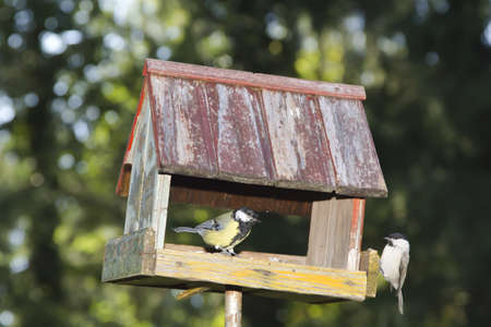Willow tit and Great tit in old bird house in the park - nice colorful bokeh photo