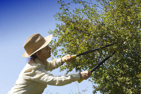 Woman gardener cutting back tree branches and hedge in garden, on sunny afternoon photo