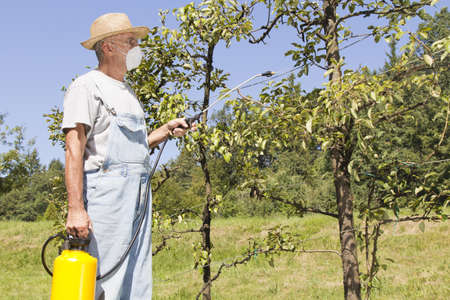 Gardener using a sprayer for applying an insecticide or fertilizer to his fruit trees, on sunny morning Stock Photo