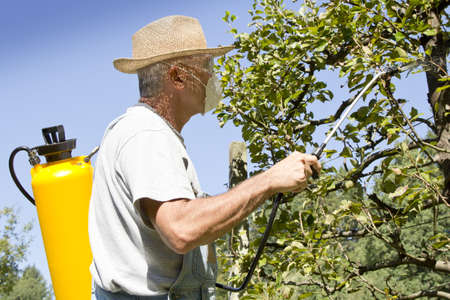 Gardener using a sprayer for applying an insecticide or fertilizer to his fruit trees, on sunny morning Standard-Bild