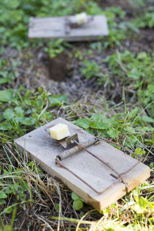 Mouse traps on garden lawn closeup-selective focus Stock Photo - 15167392