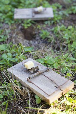 Mouse traps on garden lawn closeup-selective focus Stock Photo - 15167392