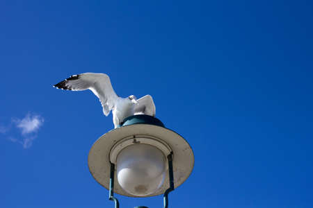 Seagull landing on the harbour lamp photo