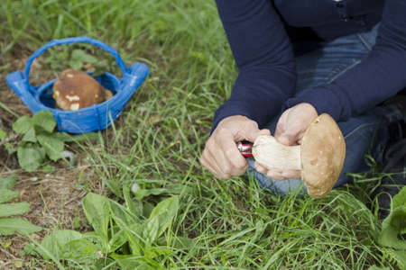 Cleaning mushroom Boletus Edulis, on sunny autumn photo