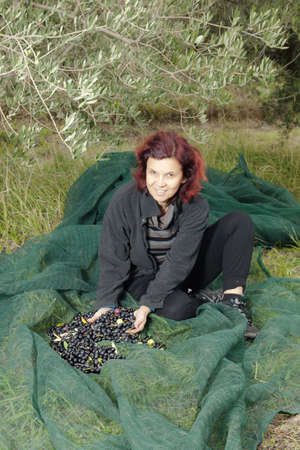 Woman resting on OLIVE HARVESTING NET after gathering olives photo