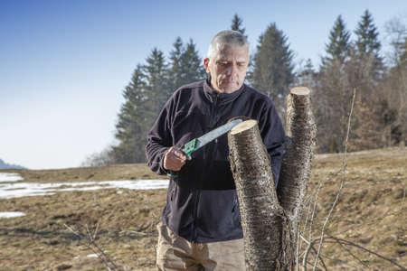 cleft: SERIES OF PHOTOS Grafting fruit tree, Mid aged man gardener sawing, cutting fruit tree